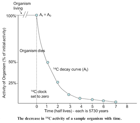 Graph showing how C14 decays in an organism.